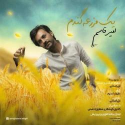 دانلود آهنگ یک مزرعه گندم از امیر قاسم صدقی  با متن ترانه